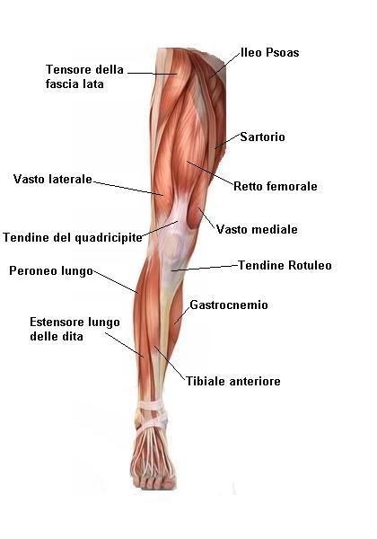 Quadrizeps Muskelfaserriss, Verletzungen, Kälte, Gelände, Spiel, Fußball, böse, schlaff, Unterstützung