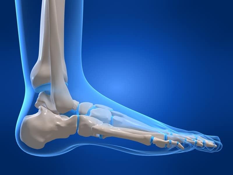 Anatomie, Fuß, Mittelfußknochen, fünfter, V, Bein, untere Extremität, Wadenbein, Fibula, Schienbein, Tibia, Fersenbein, Ferse, Sprungbein, Würfelbein, Kahnbein, Keilbein