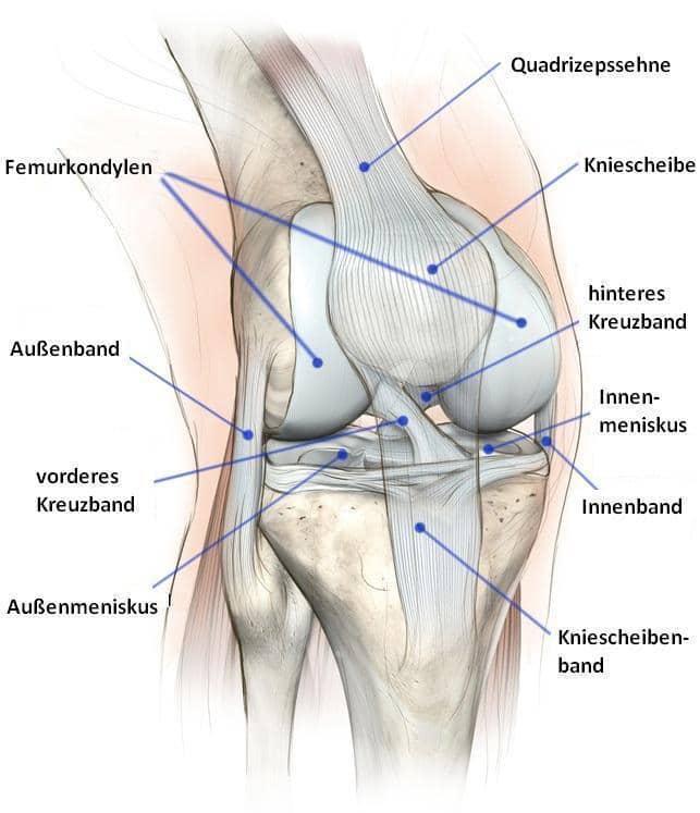 Gelenk, Knie, Synovitis, Schmerzen, Schmerz, Entzündung, Schmerz, Membran, Synovialis, Synovia