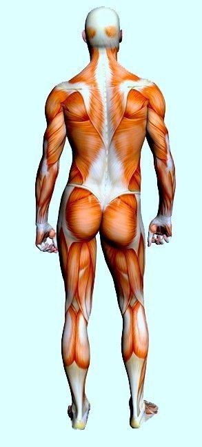 Muskelverspannung,Verhärtung,Schmerzen,verhärtet,Anspannung,Kontraktion,Sport,Sportler,Überlastung,Verletzung