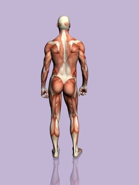 Anatomie,Körper,Brustwirbelsäule,Rücken,Halswirbelsäule,zervikal,Lendenwirbelsäule,lumbal,Nerv,Kontraktur
