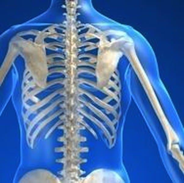 Anatomie,Körper,Brustwirbelsäule,Rücken,Halswirbelsäule,zervikal,Lendenwirbelsäule,lumbal,Rippen,Nerv,Rücken,Wirbelsäule,Schulterblatt,D1,D2,D3,D4,D5,D6,D7,D8,Arm,obere Rückenschmerzen,Schmerzen in der Brustwirbelsäule
