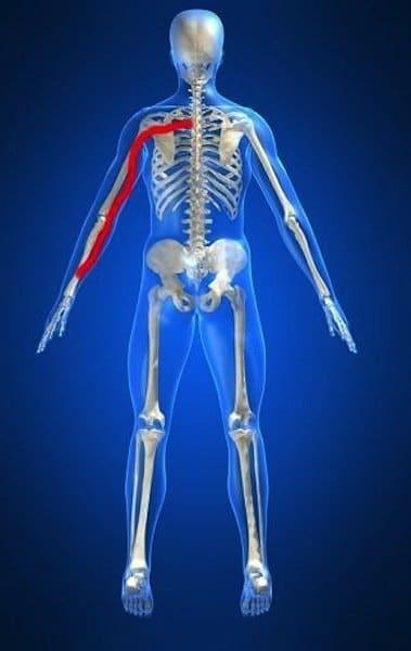 Anatomie des Körpers,Arm,obere Gliedmaße,Nerv,Muskel,Physiotherapie und Rehabilitation,Rücken,Neuropathie,Bandscheibenschaden,Bandscheibenvorfall,Protrusion,Bulging,Wirbelsäule,Bandscheibe,Nervenwurzel,Halswirbelsäule,zervikal,C5,C6,C7,D1
